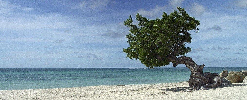 Uitgaan op Aruba, wat zijn de hotspots?